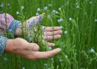 俄罗斯亚麻籽 油菜籽 葵花籽 燕麦 荞麦