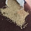 沈陽廠家大量優質白芝麻 熟芝麻20kg/袋低價直銷