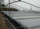潮汐灌溉在移动苗床培养的优缺点