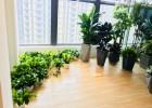 杭州办公室植物租赁·杭州办公室绿植公司·绿化园艺公司