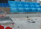 广州天河区定做玻璃鱼池,天河哪里定做海鲜池,天河酒店鱼池