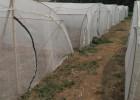 结实加厚蚂蚱网棚纯新料质量好耐咬蚂蚱拱形网棚
