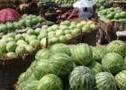 2019河南西瓜代办|河南西瓜批发价格|河南西瓜价格产地