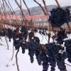 美的庄园北冰山葡萄红酒 集安冰葡萄酒 鸭江河谷冰葡萄酒