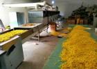 带式微波菊花干燥设备定制厂家