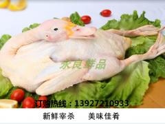 江西南昌实力最强冷冻鸭厂家批发商