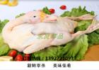 广东佛山冷冻鸭白条鸭