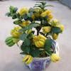 武汉花园绿化园林设计施工管理室内外花卉植物养维护苗木补种送货