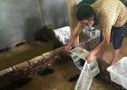 家庭农场黑豚养殖项目