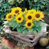湖北武汉出售苗木、花卉、承接园林绿化工程苗木花卉基地