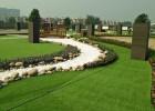 2.5cm网格仿真草坪、仿天然草坪、运动草坪、足球场运动草坪