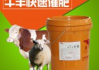 肉牛快速催肥  肉牛怎么喂才能不浪費飼料
