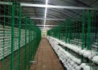 菇房菌棒架生长网架