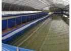 帆布养殖水蛭 大棚养殖蚂蟥 养殖帆布虾池高密度