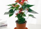 武汉花卉基地供应八角金盘银杏香樟绿植盆栽耐阴好养的大小苗木