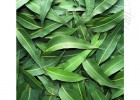 厂家直供桉叶油 蒸馏提取 桉叶素 优质桉叶油批发
