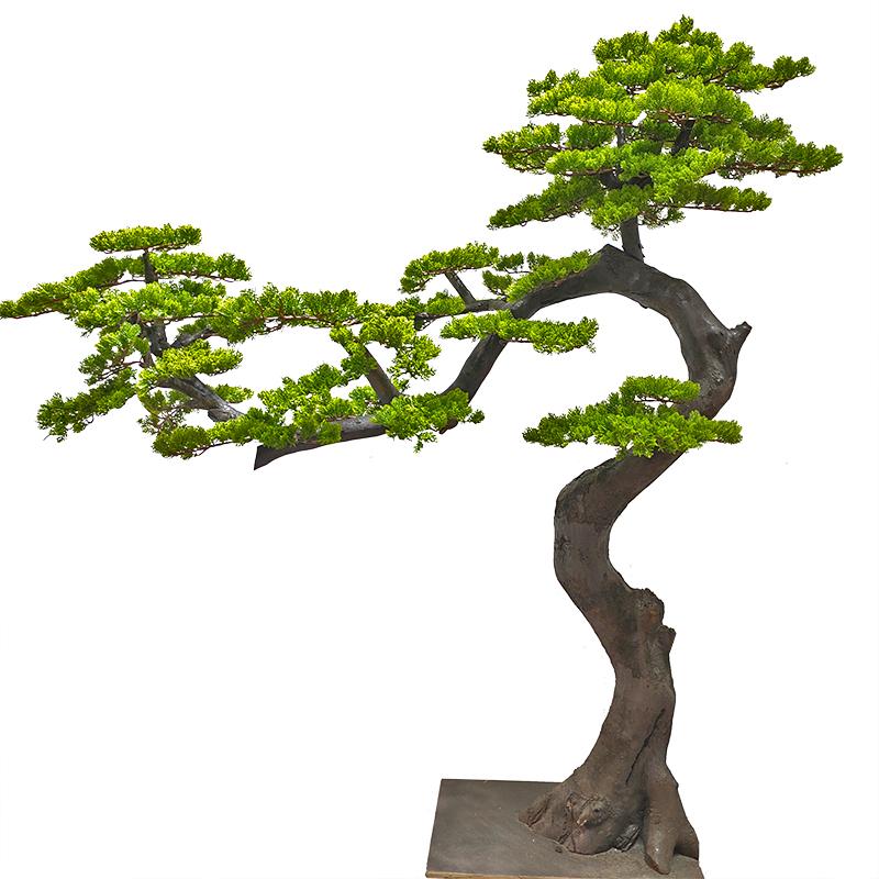 仿真松树盆景假迎客松树 盆栽造型装饰来图定做造型罗汉松美人松