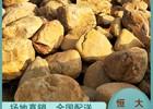 天然黄蜡石 原石 摆件石 黄石 奇石礼品 招牌石 刻字石