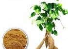 葛根提取物 葛根粉 植物提取源头厂家 现货促销