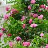 武汉树木花灌木销售庭院设计施工养护指导,武汉小区院落景观设计