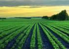 中微量元素碳基肥|中微量元素碳基肥价格|丰夷
