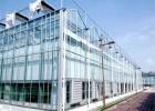 甘肃玻璃板温室建设 连栋玻璃温室承建 蔬菜大棚造价