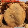 大型黄蜡石价格、刻字黄蜡石批发、广东黄蜡石厂家批发大型黄蜡石