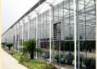 智能连体温控温室大棚 自动化玻璃温室大棚 纹络型温室