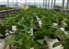 厂家直销无土栽培设施 无土栽培大棚建设 立体种植温室承建商