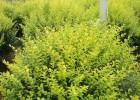 武汉户外园区绿化养护及办公区盆栽租摆服务包运费维护