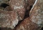 灵芝菌丝体菌块