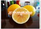 供应优质台湾金丰柠檬苗
