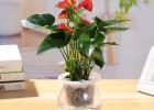 武汉户外植物租摆单位园林销售,武汉工厂花卉价格商场绿化养护