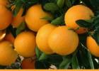 永兴冰糖橙现摘现卖,产地供货及时