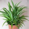 武汉单位鲜花价格工厂植物租摆,武汉绿色盆栽服务户外园艺租摆