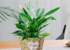 武漢綠色花卉租售工廠植物租賃,武漢綠色盆景購買商場鮮花出租
