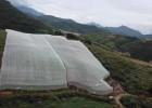 全新料果樹防蟲紗網加厚加寬防蟲網非常好用質量好