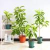 武汉绿色花卉租赁家庭盆景出租,武汉工厂绿植租摆商场鲜花报价