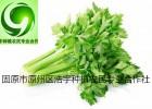 芹菜籽提取物厂家芹菜籽粉价格芹菜素旱地芹菜籽粉生粉现货批发