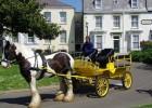 马拉松训练车,休闲马车,婚礼马车,旅游观光马车