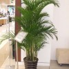 芜湖室内绿植花卉植物租赁摆放租摆观叶植物园艺养护