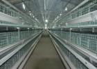 自动化养鸡设备 层叠式蛋鸡笼养设备