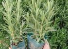 一年生花卉常见,一年生花卉花海,一年生草本植物花卉
