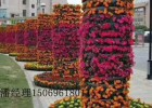 花海花卉植物,花卉植物批发,花海花卉培育