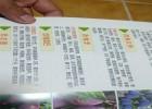 1年生蜂糖李子苗、蜂糖李子苗价格
