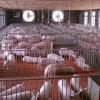 猪场专用污水处理按需定制