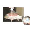 供应水产上市防伪标识,原生态品质鱼上市防伪鱼吊牌定做二维码鱼吊牌追溯