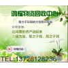 供应东莞东城废电缆回收公司,万江废旧电线电缆回收,南城收购专业光纤电缆