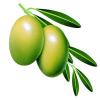 供应橄榄叶提取物