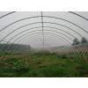 供应日光连栋温室大棚建设蔬菜温室大棚价格